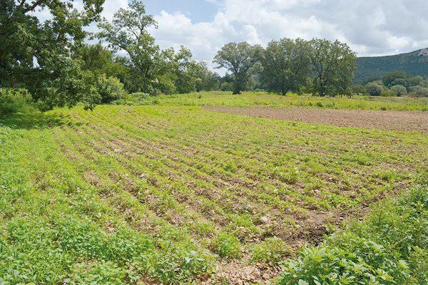 Lluvias benéficas para el ganado y cultivos en Santa Rosa: habitantes