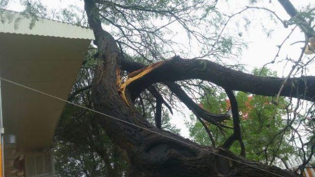 Rama de árbol cayó en la escuela Josefa Ortiz durante la noche