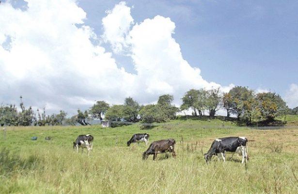 Benefician lluvias a la ganadería de la región