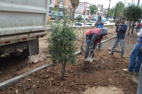 Pendiente aún de decidirse dónde trasplantarán los arbustos y rosales de la  Ave. Independencia