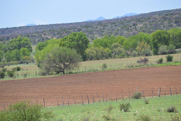 Se estima una baja del 10% en cultivos de temporal, en comparación con el año pasado
