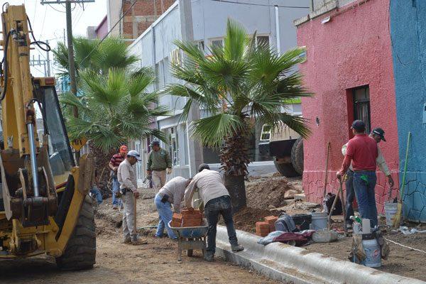 Sólo un árbol de los removidos en la Independencia ha sido trasplantado