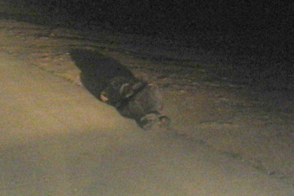 Reportan hombre sin vida; estaba inconsciente y ebrio