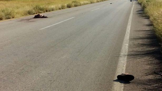 Localizan cuerpo sin vida sobre la carretera a Jimenez