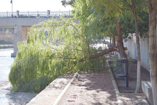 Arrancan fuertes vientos rama de un árbol del Parque Lineal