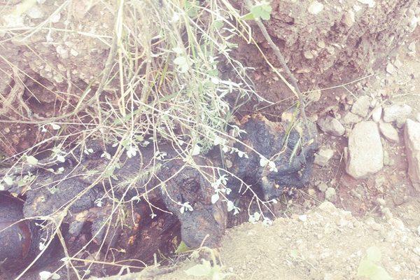 Hallan a mujer mutilada y carbonizada en Talamantes