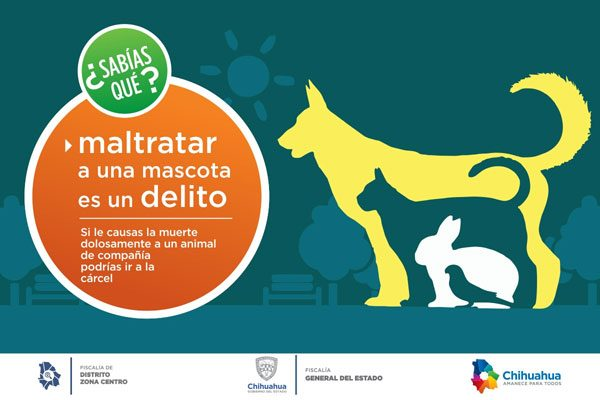 Maltratar mascotas es delito, según el Código penal del Estado