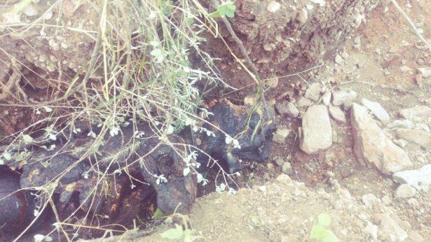 Destazan y calcinan a mujer en Rancho de Talamantes