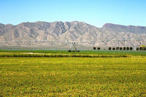 Contemplan impulsar productividad en actividades agropecuarias