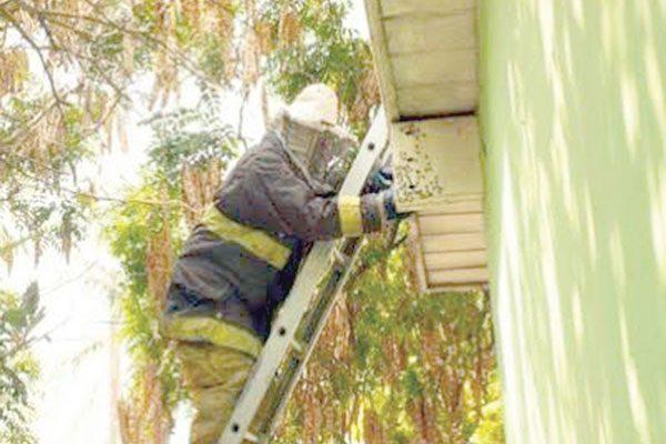 Bomberos remueven panal de abejas de un domicilio