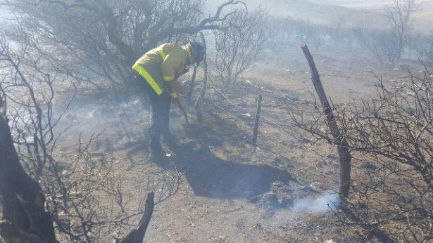 Siniestradas 500 hectáreas de pastizales en rancho primero por incendio