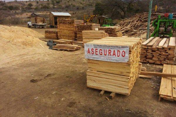 Freno a la tala ilegal en la zona de Parral