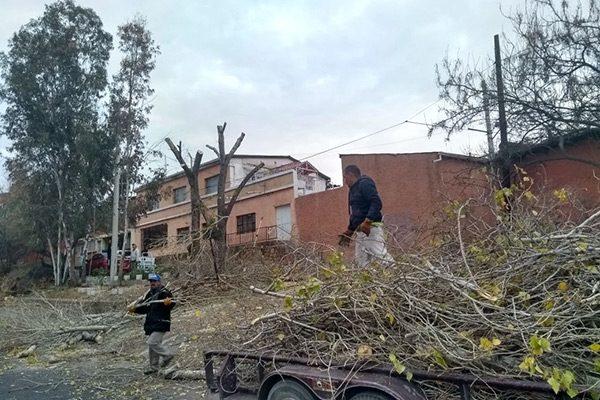 Servicios Públicos podó árboles y pasto para evitar incendios