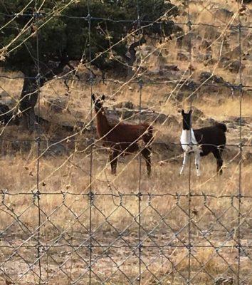 Aseguran cuatro ranchos mas a Cesar Duarte en Balleza