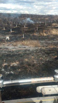 Arden pasto y 70 nogales en Talamantes, fue intencional