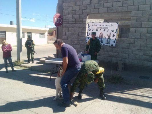Realizaran de manera permanente la vacunación Antirrábica en Parral
