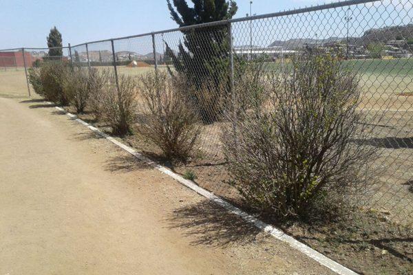 Falta cuidado a flora en espacios públicos