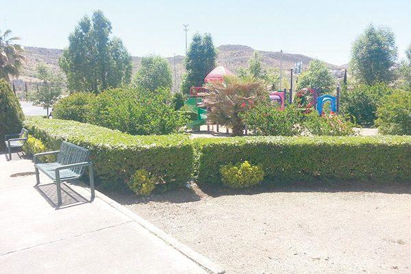 Municipio atiende áreas verdes públicas por clima atípico