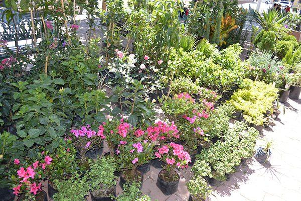 Decremento en ventas de  hasta un 50% en árboles y plantas