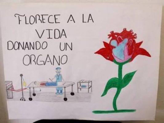 Convoca la secretaria de salud a concurso de dibujo enfocado a la donación de órganos