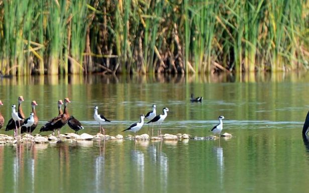 Viola Alcaldía de Meoqui zona de aves protegida