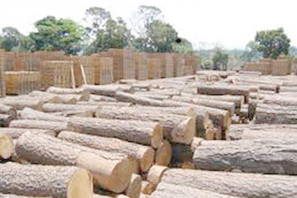Se contrae 40% venta de madera en Gpe. y Calvo