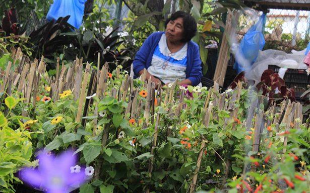 Floricultura, un diálogo de respeto con la naturaleza