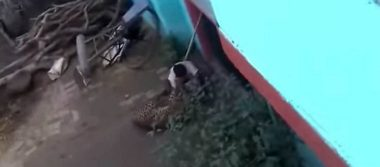 [Video] Hombre lucha contra un leopardo para salvar su vida