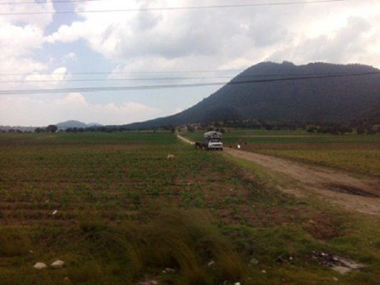 Pérdida de cultivos por falta de apoyos al campo en Nopalucan