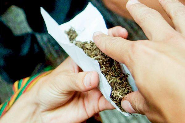 Alertan por alto consumo de marihuana