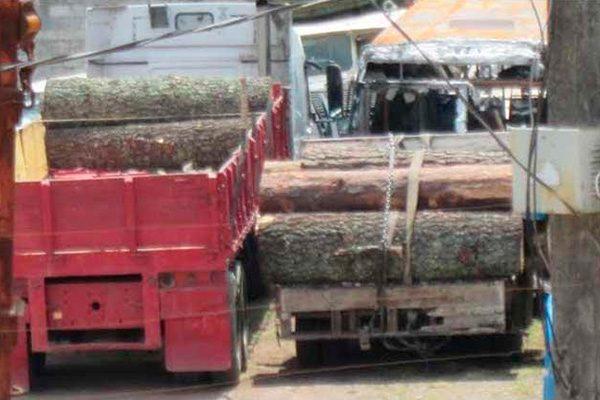 Convierte Semarnat aserraderos clandestinos en legales: regidor de Ahuazotepec