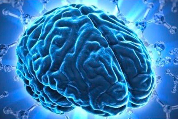 Algunos datos interesantes sobre el cerebro