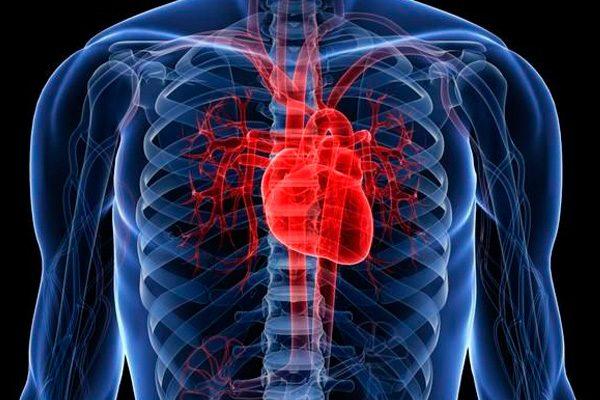 10 datos curiosos sobre el corazón