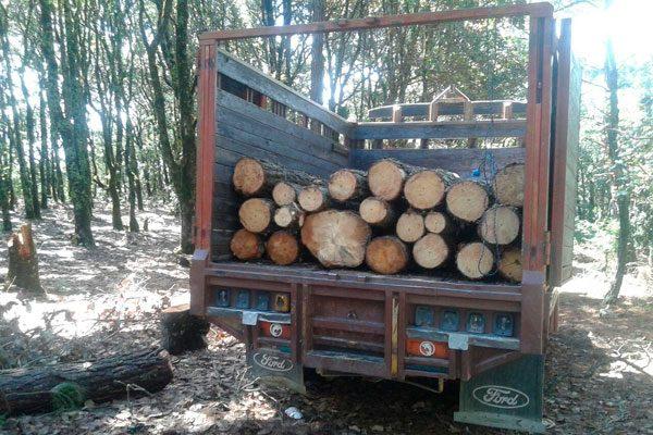Decomisan en Coxcatlán 21 rollos de madera ilícita