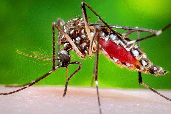 Puebla registra un caso de chikungunya en lo que va del año