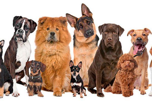 10 datos curiosos sobre los perros