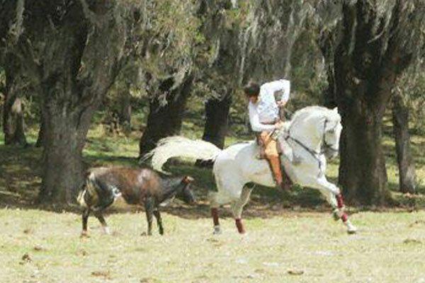 El rejoneador Horacio Casas en labores de tienta en Rancho Seco