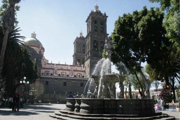 Inicia Ayuntamiento diagnóstico de árboles del zócalo