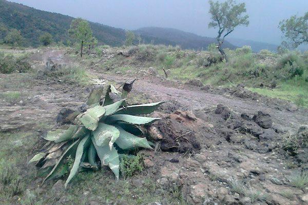 Se quejan indígenas ante la Profepa contra Almaden Minerals