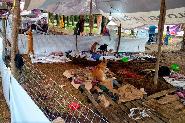 Exceso de mascotas en viviendas acusan vecinos de Acatlán