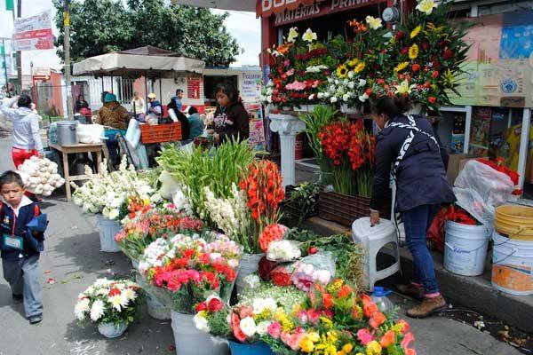 Esperan aumento en venta de flor de Muerto del 80%