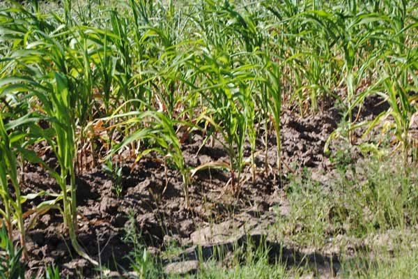 Necesario cambiar patrones de cultivo ante cambio climático: investigador
