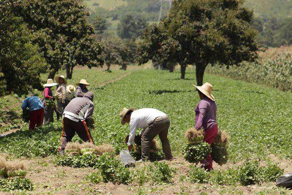 Crece 0.8 por ciento la economía de Puebla