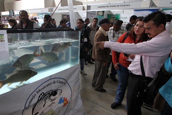 Es Puebla segundo productor de pescado, entre estados sin litoral
