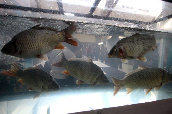 Valsequillo es viable para criadero de peces: investigador