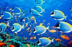 Pared de peces congelados impacta al mundo