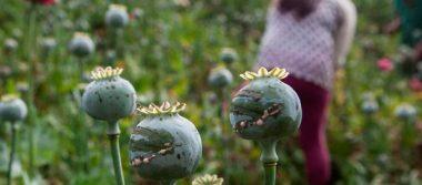 Rechazan trasiego de 'goma de opio' por territorio poblano