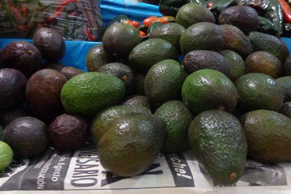 Prevén ajuste del aguacate; se vende en 90 pesos el kilo