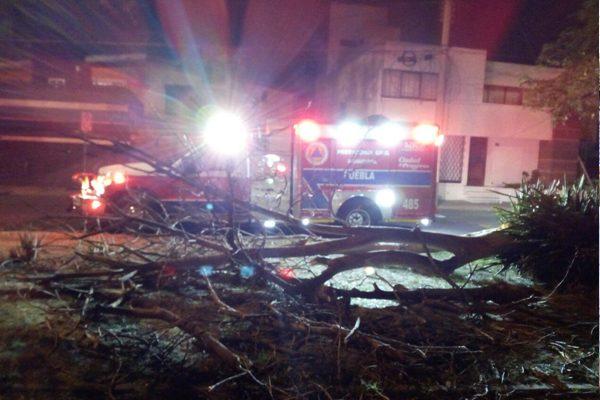 Postes y árboles derribados, saldo de fuertes ráfagas de viento en Puebla