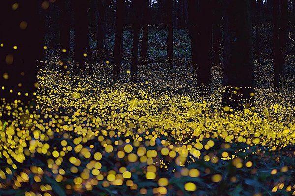 Iluminan luciérnagas el futuro turístico de Santa Rita Tlahuapan